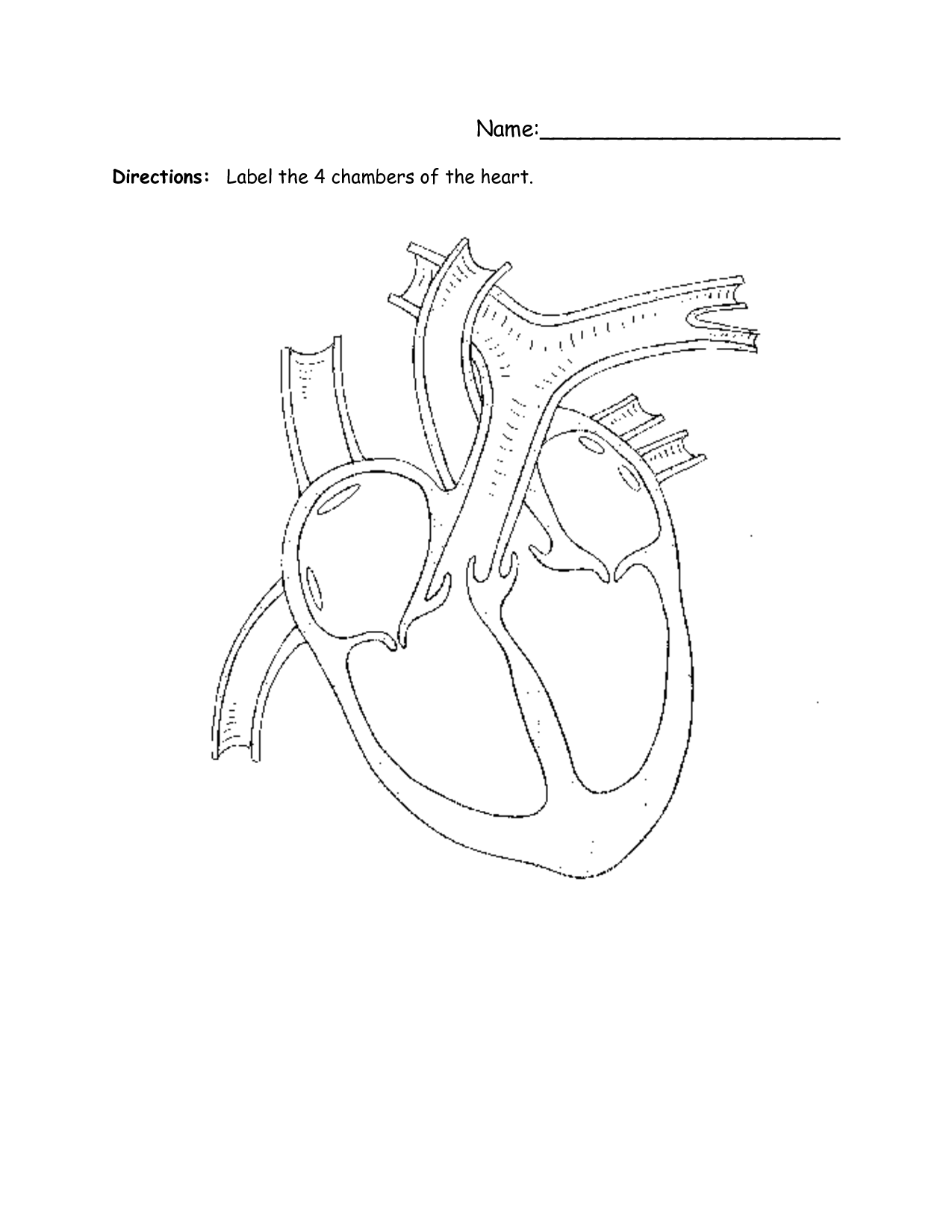 Blank Heart Diagram Worksheet Blank Human Heart Diagram