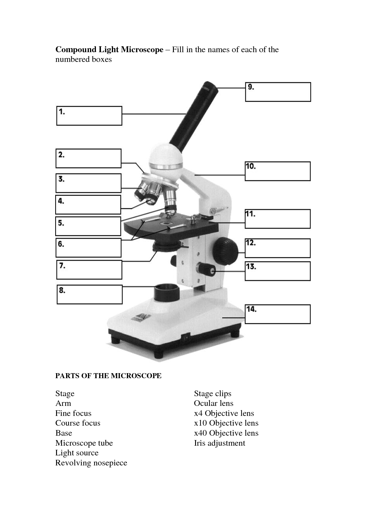 blank microscope diagram to label visio entity relationship template 12 best images of light parts worksheet