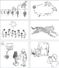 14 Best Images of Basic Needs Of Living Things Worksheets ...