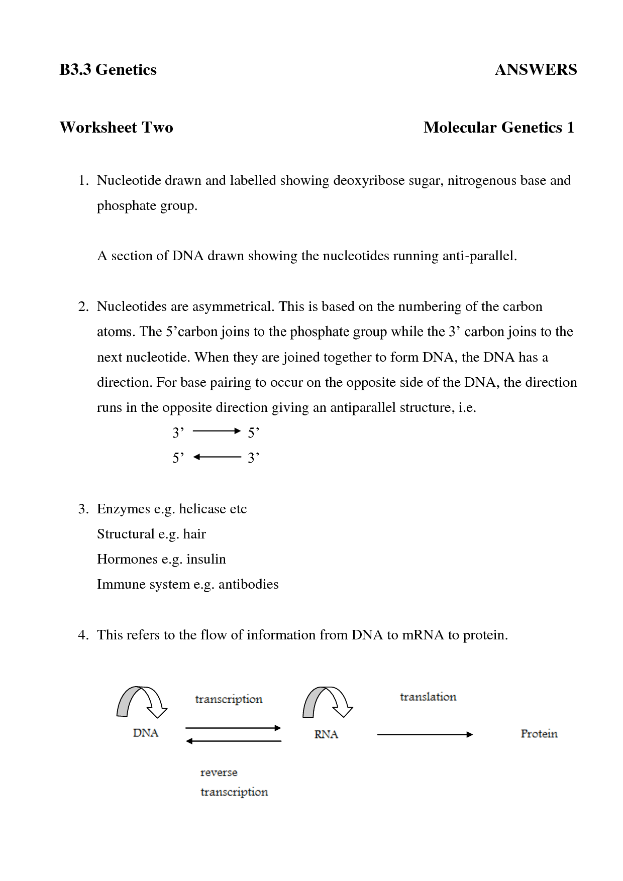 35 Dna And Protein Synthesis Worksheet Answers