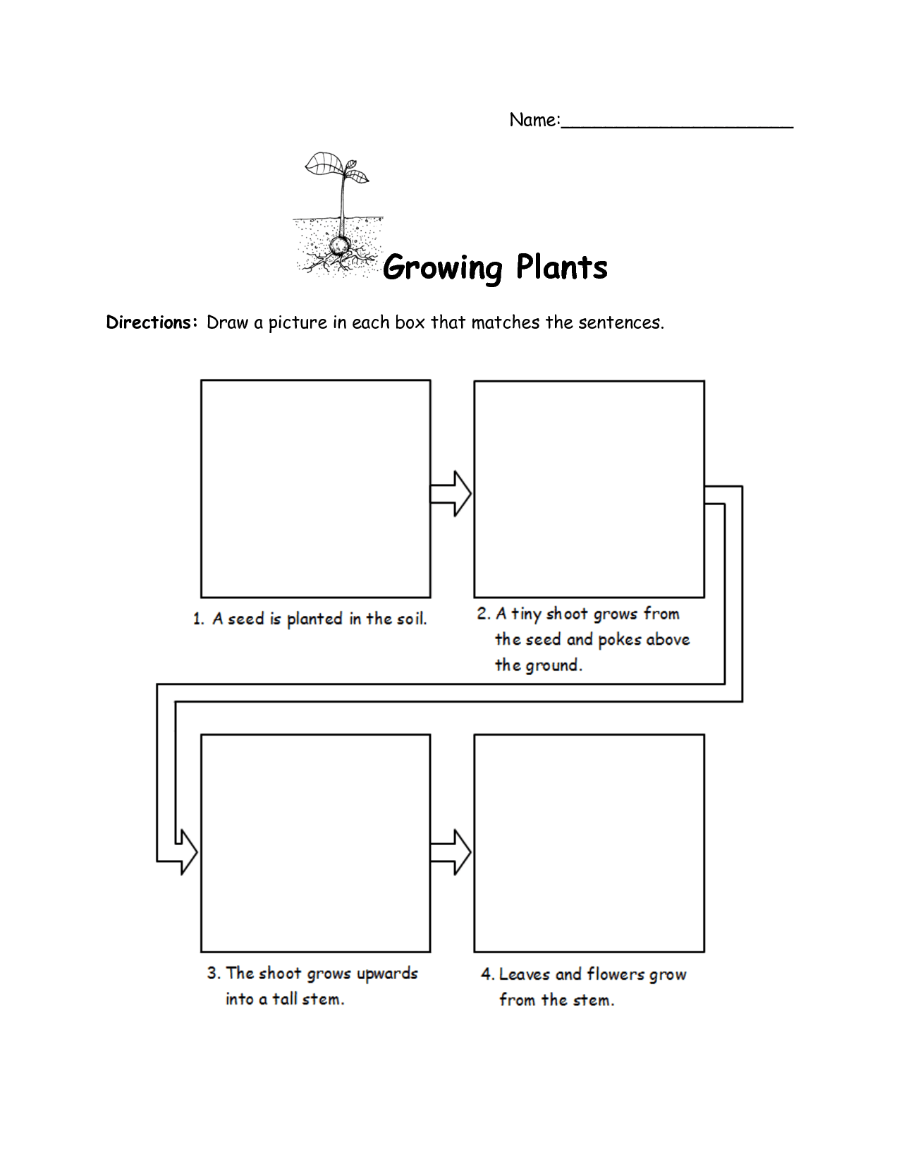 14 Best Images Of How Plants Grow Worksheets