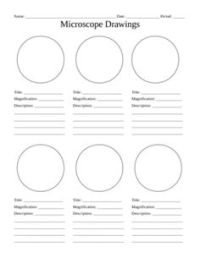 16 Best Images of Lab Template Worksheet