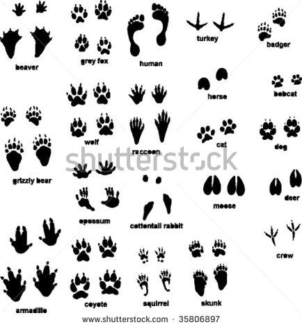 15 Best Images of Animal Tracks Matching Worksheet