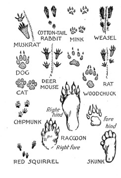 15 Best Images of Animal Tracks Matching Worksheet