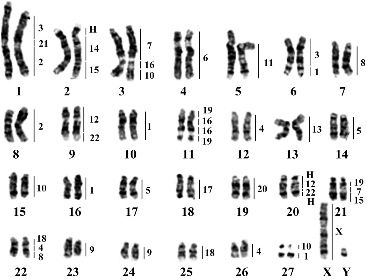 11 Best Images Of Karyotype Worksheet Answers