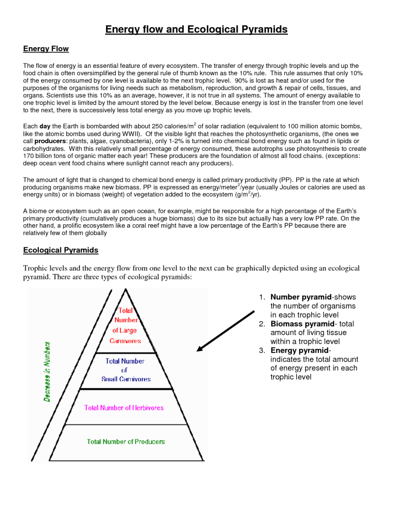 How To Make An Energy Pyramid Electric Cooker Wiring Diagram Ecological  Energy Pyramid Worksheet 235094 How