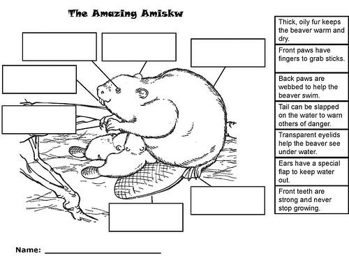 9 Best Images of Evolution Worksheets Elementary