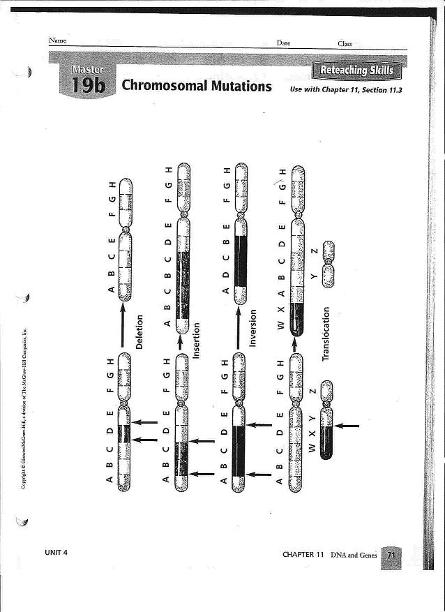12 Best Images of Gene And Chromosome Mutation Worksheet