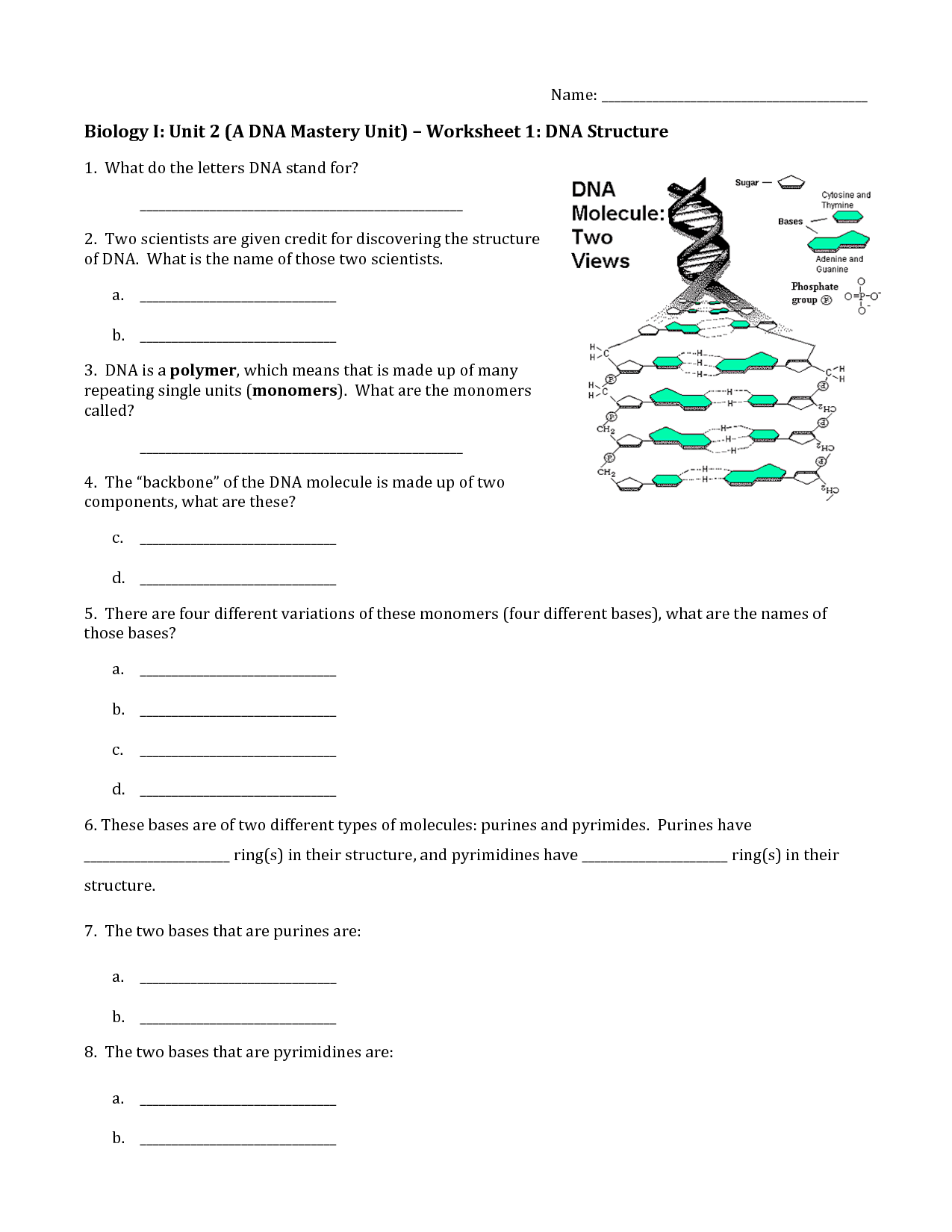 17 Best Images Of Dna Worksheet Printable