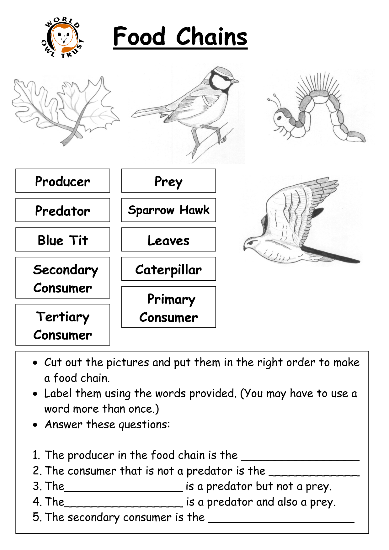 11 Best Images Of Printable Food Chain Worksheets