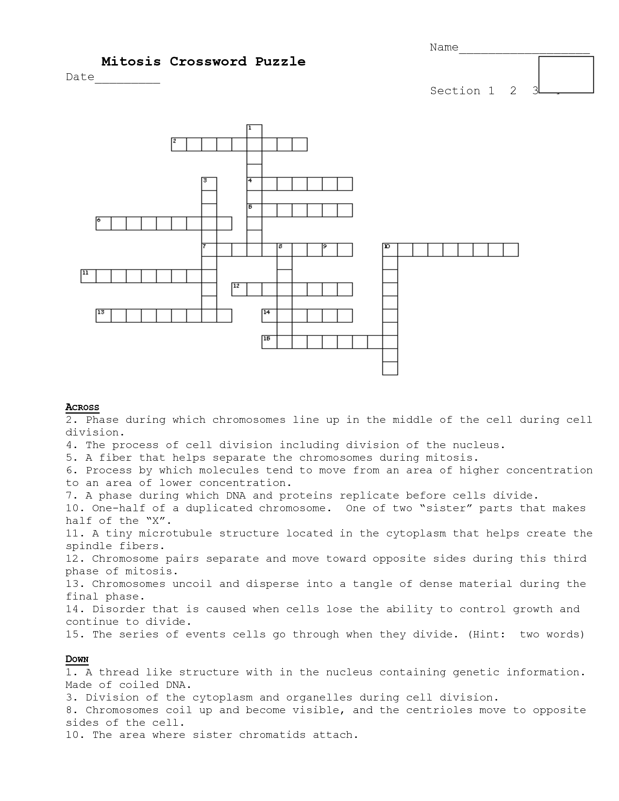 14 Best Images Of Mitosis Worksheet Answers Crossword
