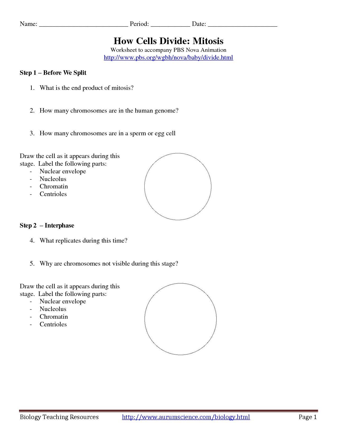 Biology Worksheet On Cell Division