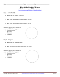 14 Best Images of Mitosis Worksheet Answers Crossword ...