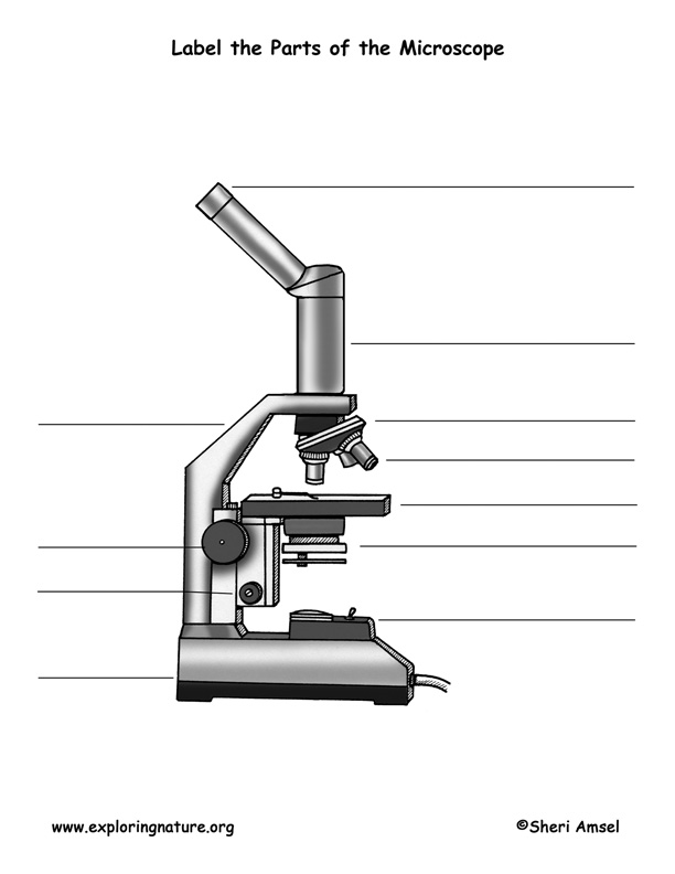 parts of a compound light microscope diagram lewis dot for na 15 best images worksheet - quiz worksheet, ...