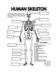 11 Best Images of Blank Skeletal System Worksheet