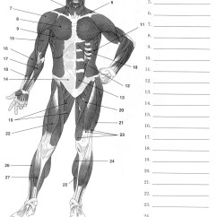 Head And Neck Muscles Diagram Blank Cirque Glacier 14 Best Images Of Muscle Anatomy Worksheet - Upper Limb Worksheet, Muscular ...