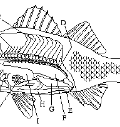 8 best images of fish labeling worksheet [ 1539 x 860 Pixel ]