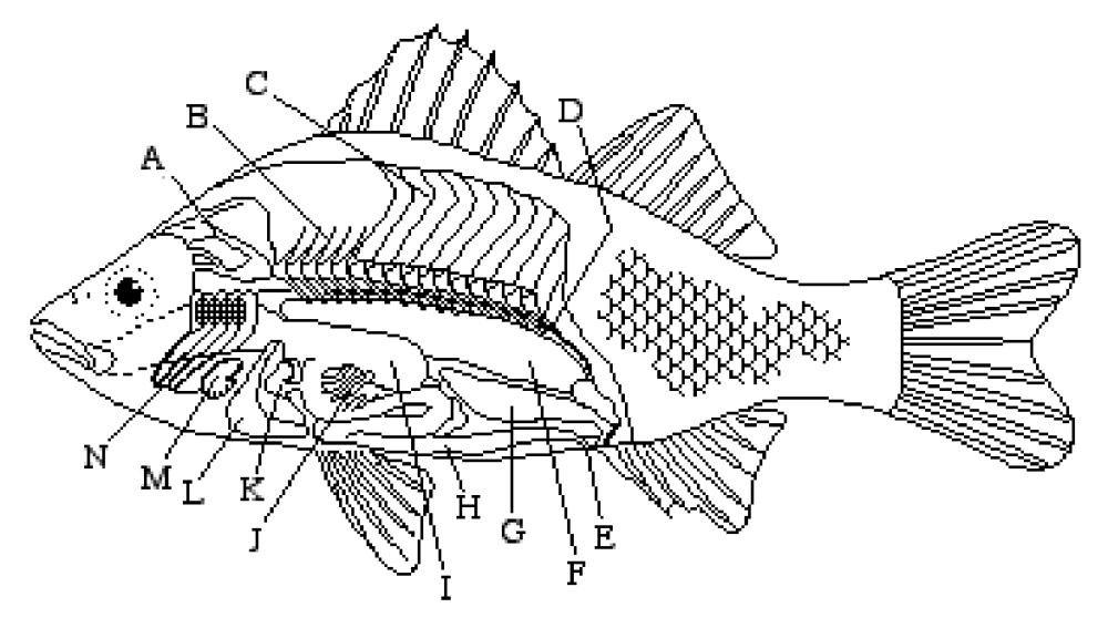 medium resolution of 8 best images of fish labeling worksheet