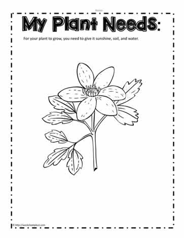 Plant Needs Worksheet Worksheets