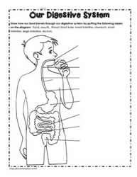 Human Body Worksheets