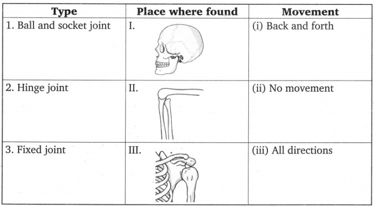 CBSE Class 6 Science Body Movements Worksheets 1