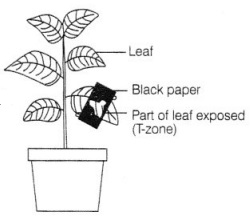 CBSE Class 7 Science Nutrition in Plants Worksheets 1