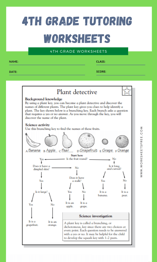 4th Grade Tutoring Worksheets 4
