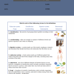 5th grade science worksheets with answer key8