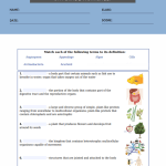 6th grade science worksheets pdf