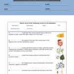 6th grade science worksheets pdf