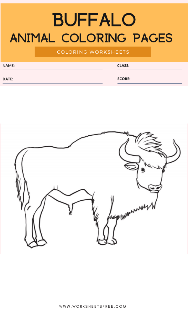 Buffalo Coloring Page - Animal Coloring Pages Worksheets
