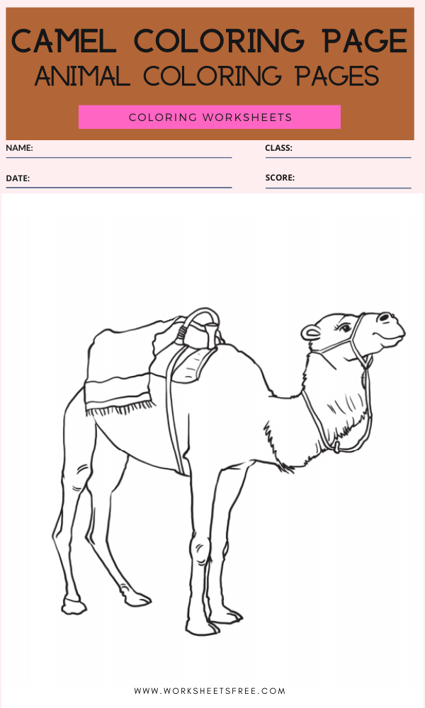 Camel Coloring Page - Animal Coloring Pages Worksheets