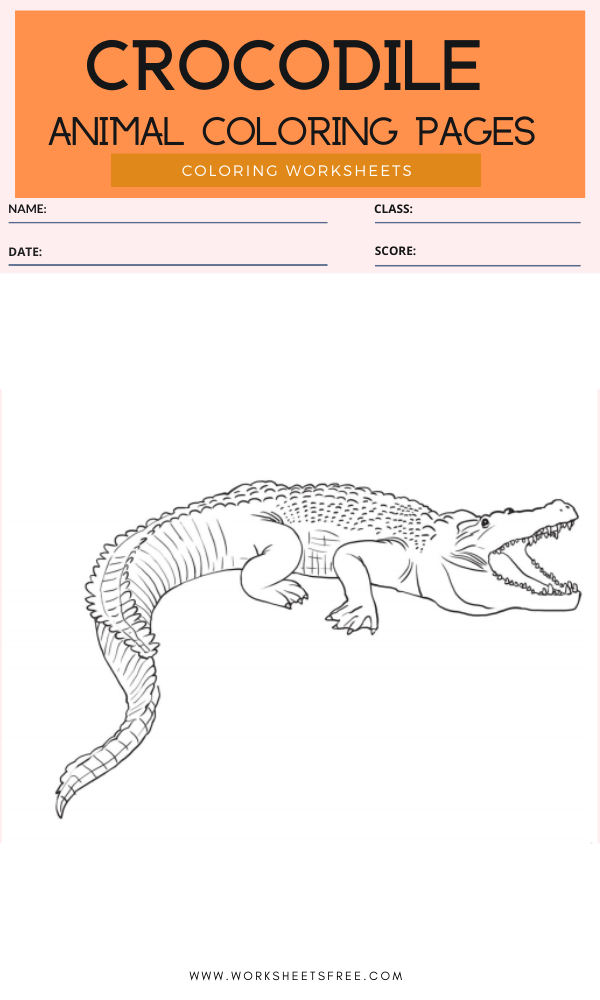 Crocodile Coloring Page - Animal Coloring Pages Worksheets