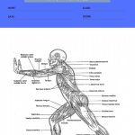 anatomy and physiology coloring worksheets 1