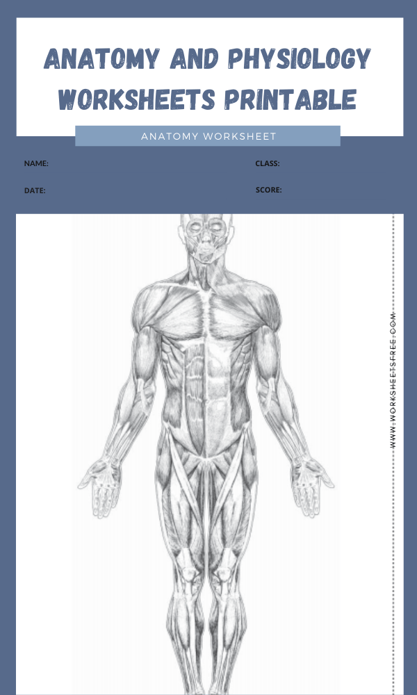 anatomy and physiology worksheets printable 1