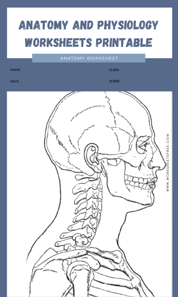 anatomy and physiology worksheets printable 3