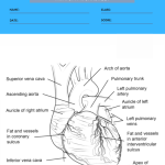 anatomy coloring worksheets 2