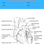anatomy coloring worksheets 2