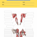 anatomy labeling worksheets 5