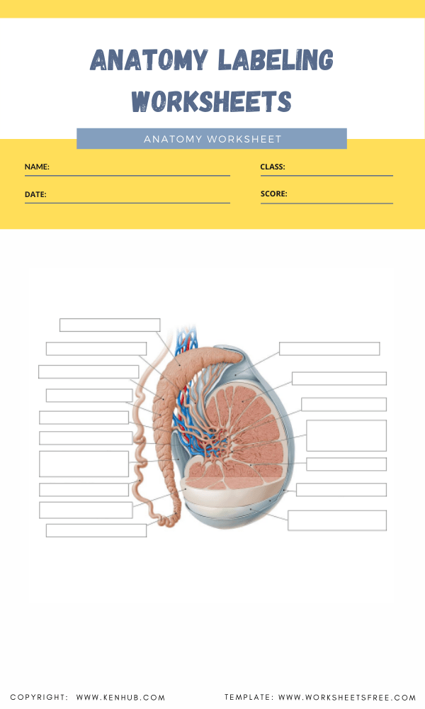 anatomy labeling worksheets 7