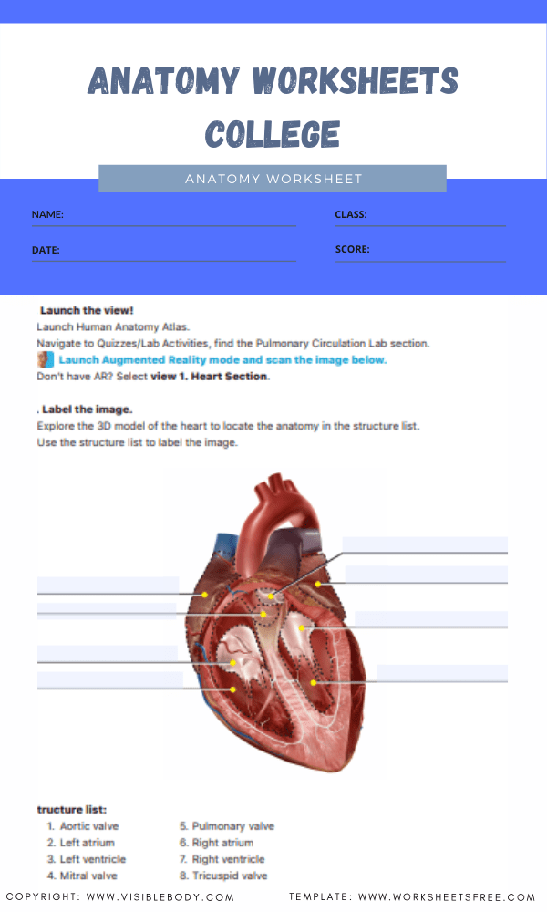 anatomy worksheets college 1