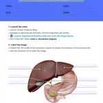 anatomy worksheets college 5