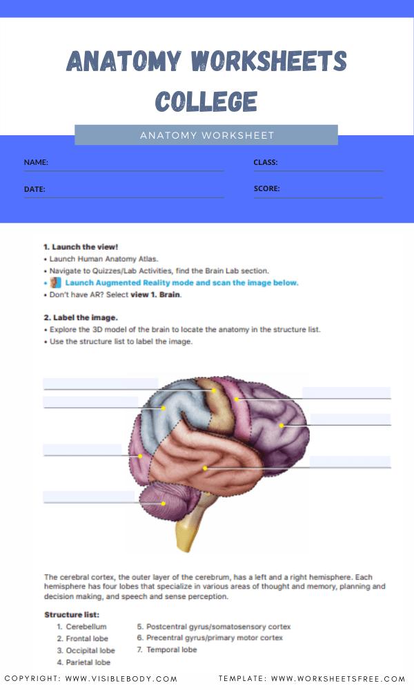 anatomy worksheets college 6