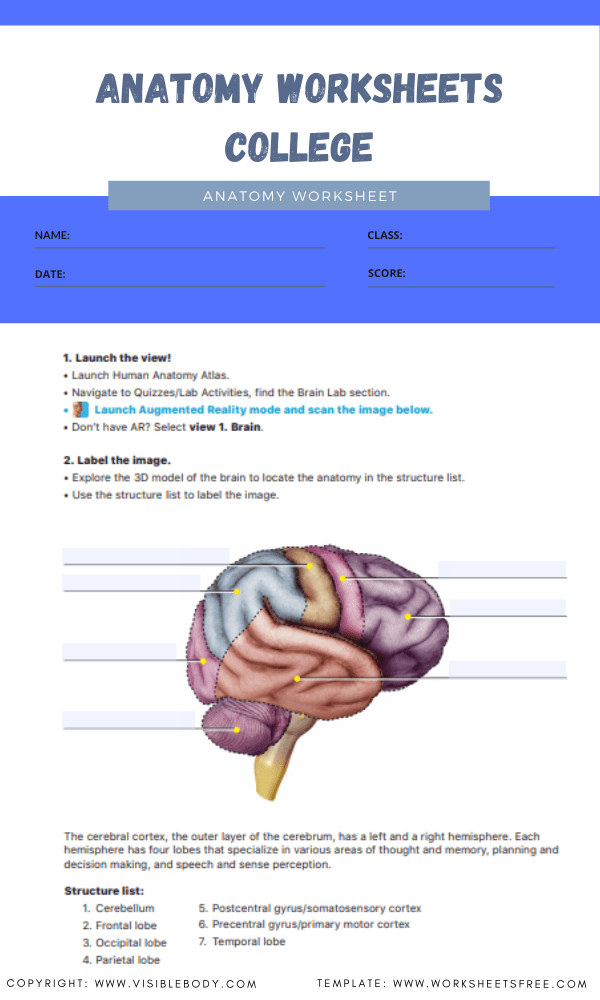 anatomy worksheets college 6