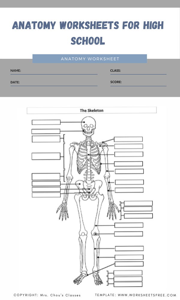 anatomy worksheets for high school 1