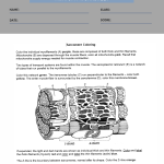 anatomy worksheets for high school 2