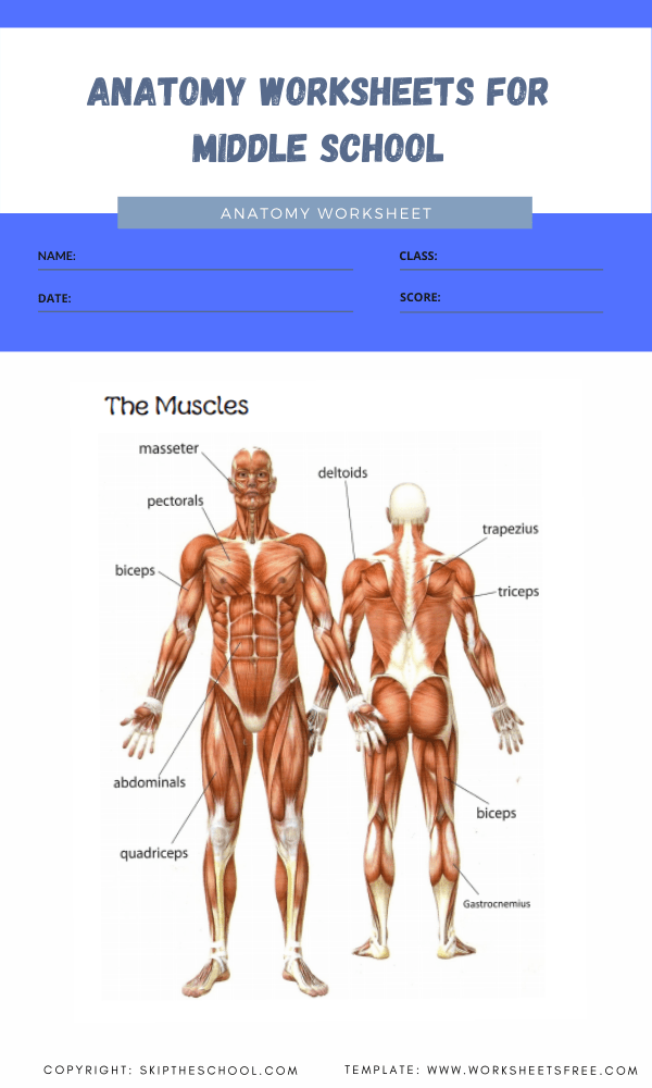 anatomy worksheets for middle school 4