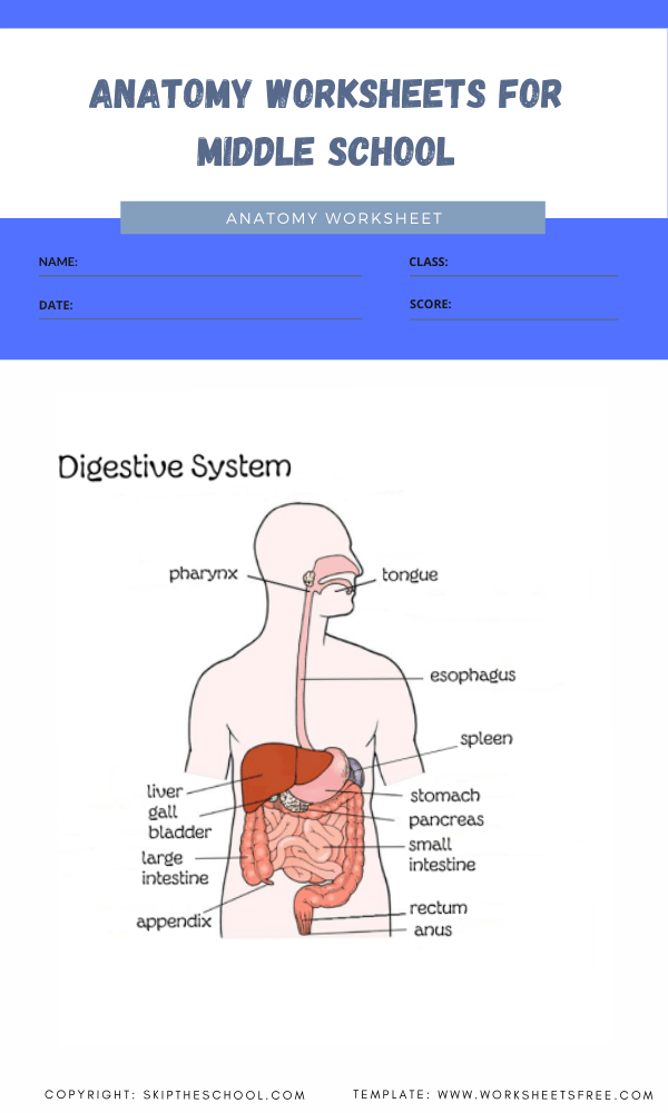 anatomy worksheets for middle school 6