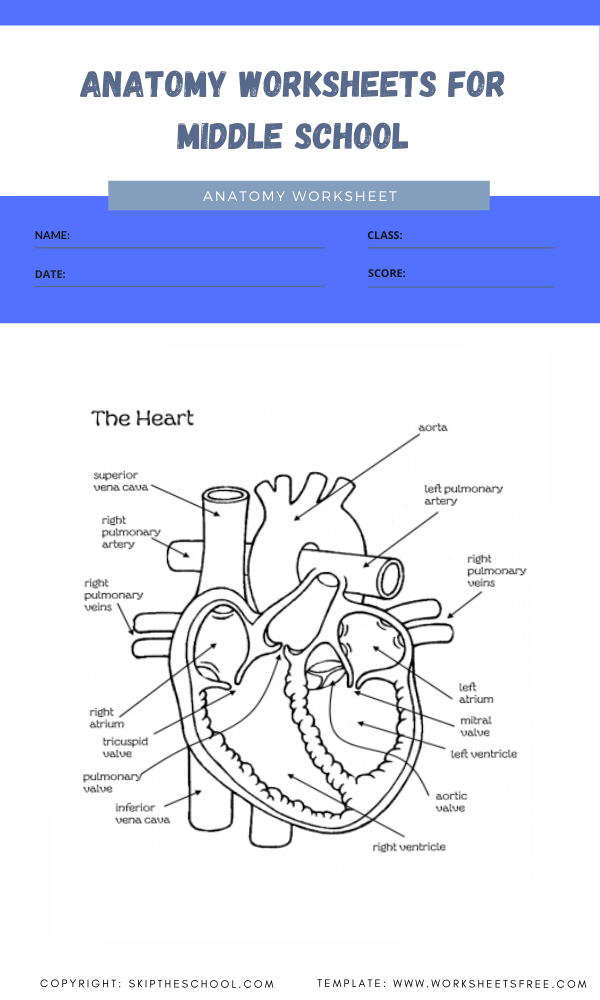 anatomy worksheets for middle school 8