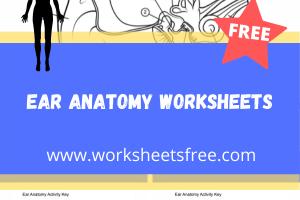 ear anatomy worksheets